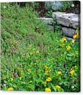 Flowers On A Rock Wall Acrylic Print