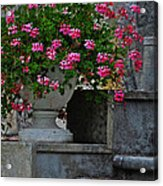 Flowers On The Steps Acrylic Print