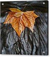 Flowing Leaf Acrylic Print