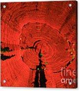 Fluorescent Coral In Uv Light Acrylic Print