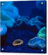 Fluorescent Corals Acrylic Print