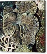 Fluted Giant Clam Acrylic Print by Georgette Douwma