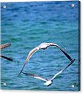 Fly Away Home Acrylic Print