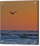 Fly By Acrylic Print by Charles Warren
