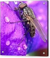 Fly In The Rain Acrylic Print