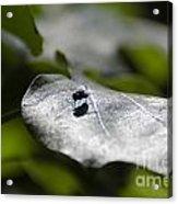 Fly On A Green Leaf Acrylic Print