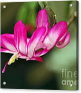 Flying Cactus Flower Acrylic Print
