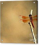Flying Colours Acrylic Print by Vishakha Bhagat