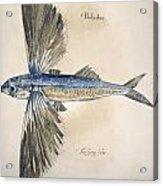 Flying-fish, 1585 Acrylic Print