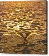 Flying Over Icy Waters Acrylic Print