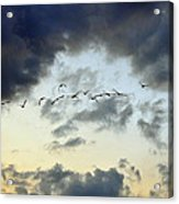 Flying South For The Winter Acrylic Print