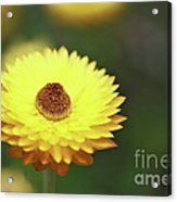 Focal Point Acrylic Print