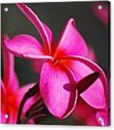 Focus Acrylic Print