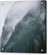 Fog Blankets Spruce Trees  In Yoho Acrylic Print