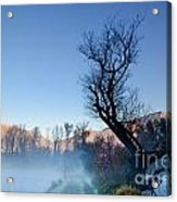 Foggy Road With A Tree Acrylic Print