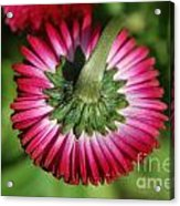 Folded Flower Acrylic Print