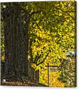 Foliage At The Cemetery Acrylic Print
