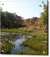 foliage in the swamp lands of CT Acrylic Print