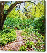 Follow The Path  Acrylic Print