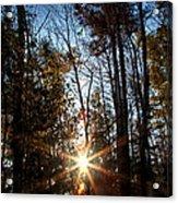 Follow The Sun Acrylic Print