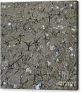 Foot Prints In The Mud Acrylic Print