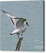 Foot Up Wing Test Acrylic Print