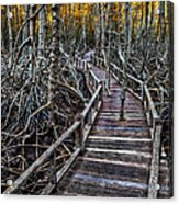 Footpath In Mangrove Forest Acrylic Print by Adrian Evans