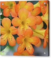 For The Love Of Orange Acrylic Print