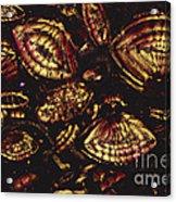 Foraminiferous Limestone Lm Acrylic Print