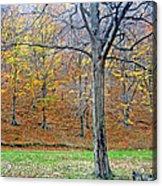 Forest - Jiu Defile Acrylic Print