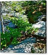 Forest And Stream 2 Acrylic Print