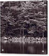 Forest At Jordan Pond Acadia Bw Acrylic Print