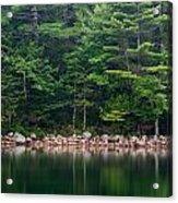 Forest At Jordan Pond Acadia Acrylic Print
