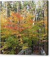 Forest Bridge Acrylic Print