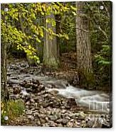Forest Brook Acrylic Print