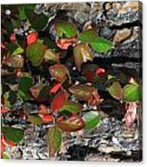 Forest Color Acrylic Print