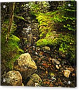 Forest Creek Acrylic Print