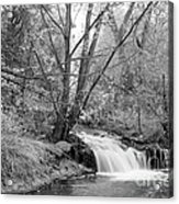 Forest Creek Waterfall In Black And White Acrylic Print