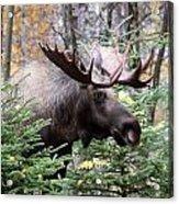 Forest Creeper Acrylic Print