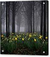 Forest Daffodils Acrylic Print