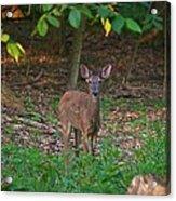 Forest Edge 7365 1754 Acrylic Print