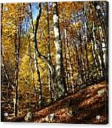 Forest Fall Colors 4 Acrylic Print