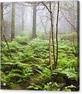 Forest Ferns On A Foggy Morning Acrylic Print