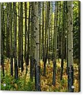 Forest Floor In Autumn, Bow Valley Acrylic Print