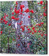 Forest Flowers Bhuping Palace Acrylic Print