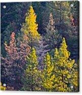 Forest Foliage  Acrylic Print