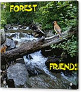 Forest Friends Sharing A Log Over A Creek On Mt Spokane Acrylic Print