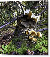 Forest Fungi Acrylic Print