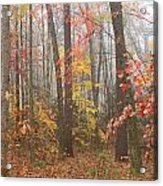 Forest In Late Autumn Acrylic Print