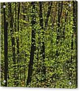 Forest In Spring Foliage, Six Mile Lake Acrylic Print